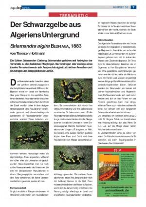 thumbnail of Der Schwarzgelbe aus Algeriens Untergrund